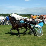 Rhyds Five Star - BHRC Derby at Ceredigion
