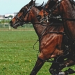 Rasus takes a gallop through the trotting season