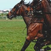 Rasus takes a gallop through the trotting season