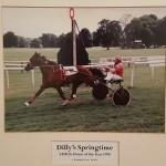 Dillys Springtime 1