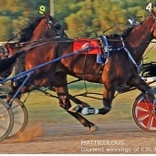 BRIGHTWELLS 29th Official Sale of Standardbreds