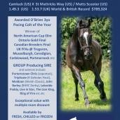 DOONBEG – Sire Stakes Nominated Stallion