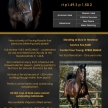 TOM HILL  – Sire Stakes Nominated Stallion for 2021